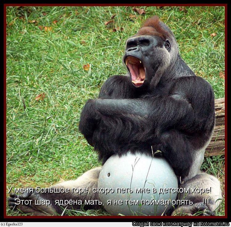 Котоматрица: У меня большое горе, скоро петь мне в детском хоре! Этот шар, ядрёна мать, я не тем поймал опять....!!!