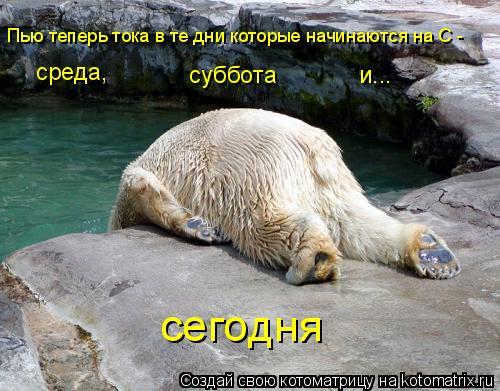 Котоматрица: среда, суббота  и... сегодня Пью теперь тока в те дни которые начинаются на С -