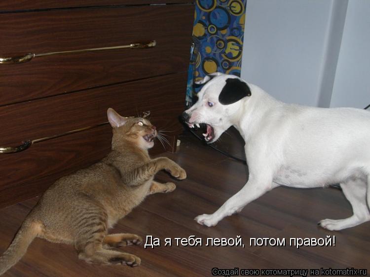 Котоматрица: Да я тебя левой, потом правой!
