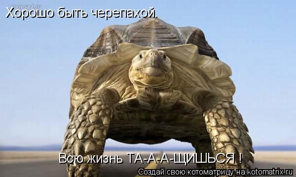 Котоматрица: Хорошо быть черепахой. Всю жизнь ТА-А-А-ЩИШЬСЯ !