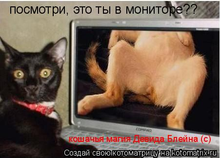 Котоматрица: посмотри, это ты в мониторе?? кошачья магия Девида Блейна (с)