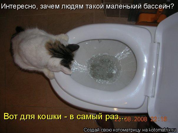 Котоматрица: Интересно, зачем людям такой маленький бассейн? Вот для кошки - в самый раз...