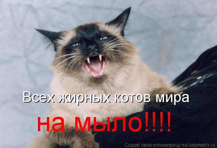 Котоматрица: Всех жирных котов мира на мыло!!!!