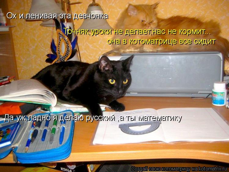 Котоматрица: Ох и ленивая эта девчонка Точняк,уроки не делает,нас не кормит... она в котоматрице все сидит Да уж,ладно я делаю русский ,а ты математику