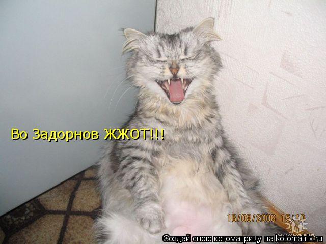 Котоматрица: Во Задорнов ЖЖОТ!!!
