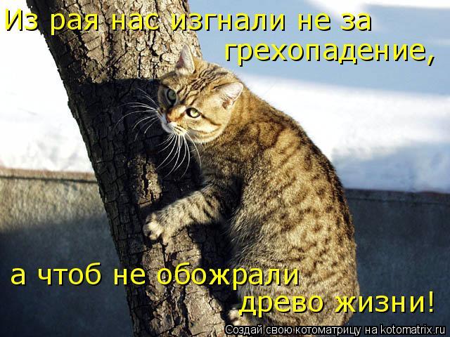 Котоматрица: Из рая нас изгнали не за грехопадение,  а чтоб не обожрали древо жизни!