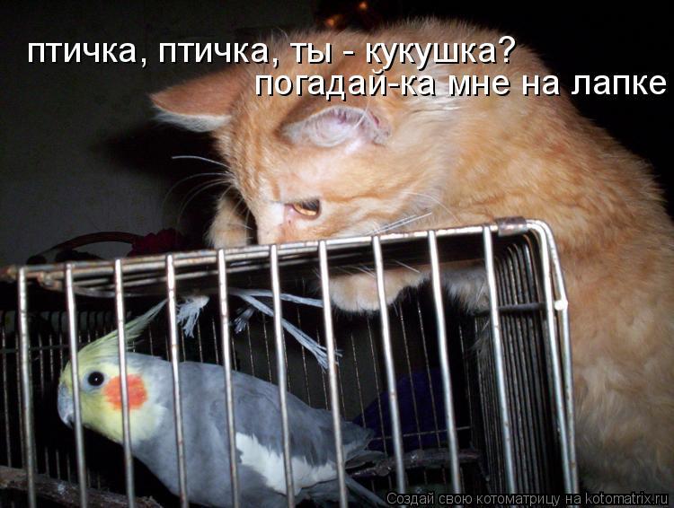 Котоматрица: птичка, птичка, ты - кукушка?  погадай-ка мне на лапке