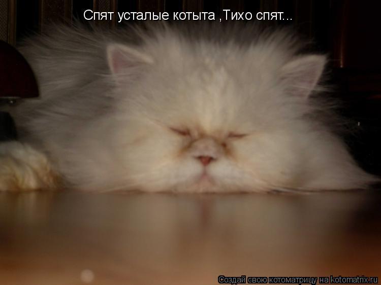 Котоматрица: Спят усталые котыта ,Тихо спят...