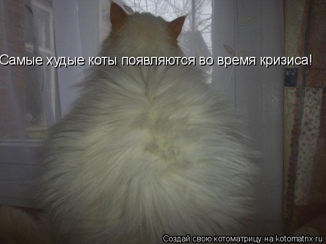 Котоматрица: Самые худые коты появляются во время кризиса Самые худые коты появляются во время кризиса!