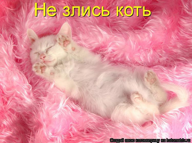 Котоматрица: Не злись коть