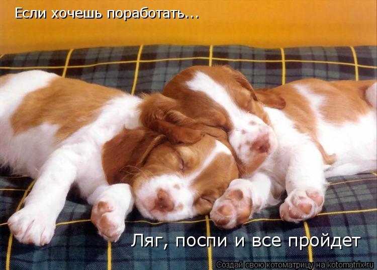 Котоматрица: Если хочешь поработать... Ляг, поспи и все пройдет