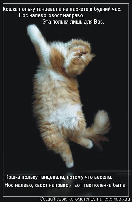 Котоматрица: Кошка польку танцевала на паркете в будний час.  Нос налево, хвост направо.   Эта полька лишь для Вас.  Кошка польку танцевала, потому что весе