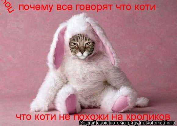 Котоматрица: почему все говорят что коти не похожи на кроликов почему все говорят что коти не похожи на кроликов... почему все говорят что коти  почему вс