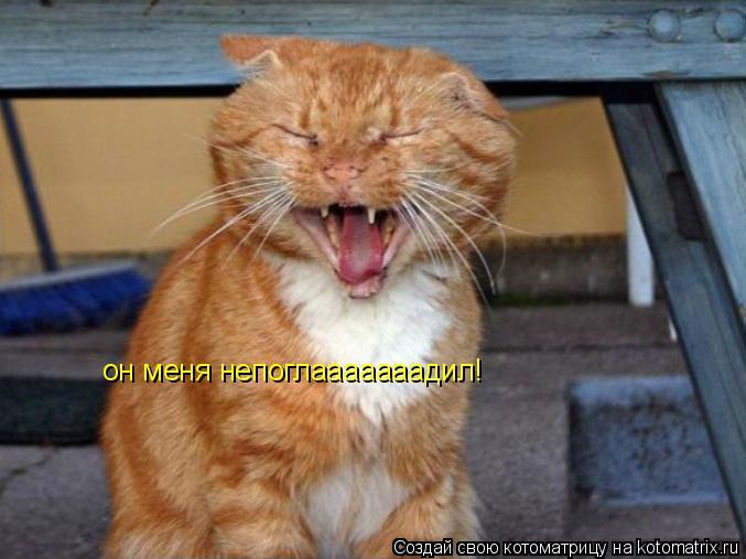 Котоматрица: он меня непоглааааааадил!