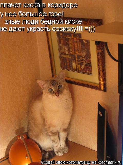 Котоматрица: плачет киска в коридоре у нее большое горе! злые люди бедной киске не дают украсть сосиску!!! =)))