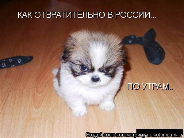 Котоматрица: КАК ОТВРАТИТЕЛЬНО В РОССИИ...  ПО УТРАМ...