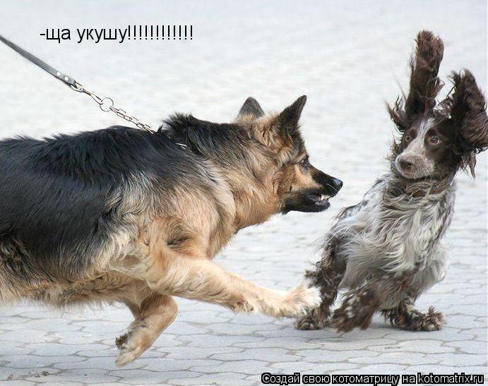 Котоматрица: -ща укушу!!!!!!!!!!!!