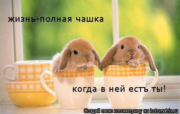Котоматрица: жизнь-полная чашка  когда в ней естъ ты!
