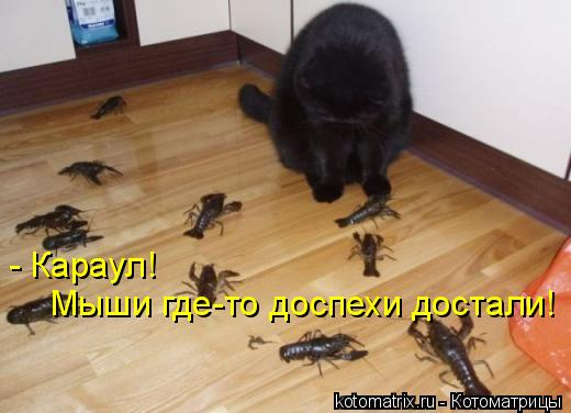 Котоматрица: - Караул!  Мыши где-то доспехи достали!