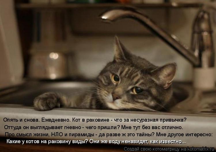 Котоматрица: Опять и снова. Ежедневно. Кот в раковине - что за несуразная привычка? Оттуда он выглядывает гневно - чего пришли? Мне тут без вас отлично. Про