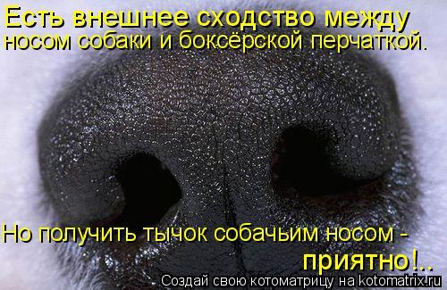 Котоматрица: приятно!.. Есть внешнее сходство между  носом собаки и боксёрской перчаткой. Но получить тычок собачьим носом -