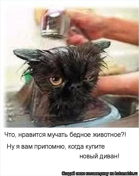 Котоматрица: Ну я вам припомню, когда купите  Что, нравится мучать бедное животное?! новый диван!