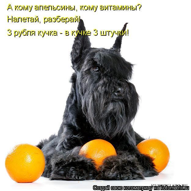 Котоматрица: А кому апельсины, кому витамины? Налетай, разберай! 3 рубля кучка - в кучке 3 штучки!