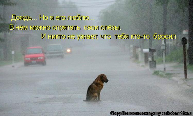 Котоматрица: Дождь... Но я его люблю...  В нём можно спрятать  свои слёзы.  И никто не узнает, что  тебя кто-то  бросил…