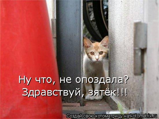 Котоматрица: Ну что, не опоздала? Здравствуй, зятёк!!!