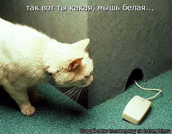 Котоматрица: так вот ты какая, мышь белая...