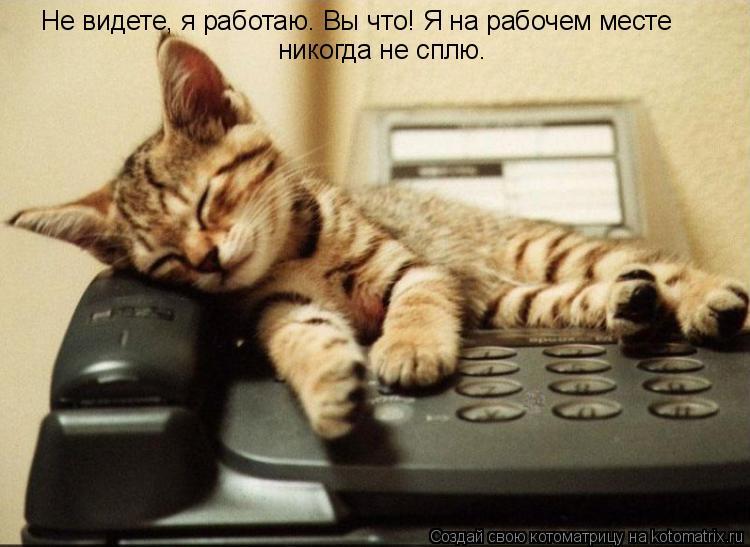Котоматрица: Не видете, я работаю. Вы что! Я на рабочем месте  никогда не сплю.