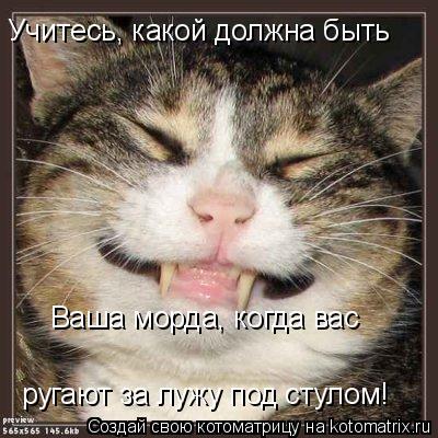 Котоматрица: Учитесь, какой должна быть  Ваша морда, когда вас ругают за лужу под стулом!