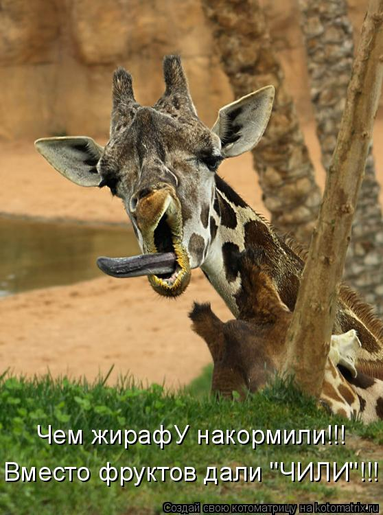"Котоматрица: Чем жирафУ накормили!!! Вместо фруктов дали ""ЧИЛИ""!!!"