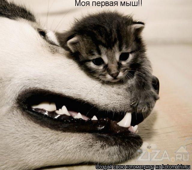 Котоматрица: Моя первая мыш!!