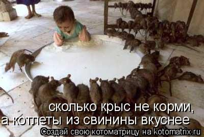 Котоматрица: сколько крыс не корми, а котлеты из свинины вкуснее