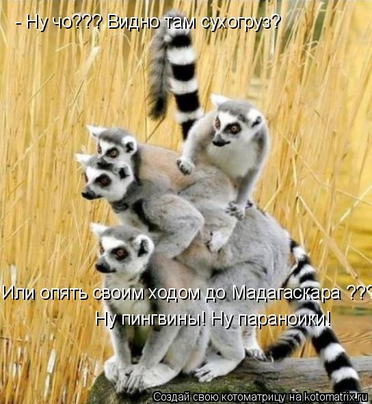 Котоматрица: Или опять своим ходом до Мадагаскара ??? - Ну чо??? Видно там сухогруз? Ну пингвины! Ну параноики!