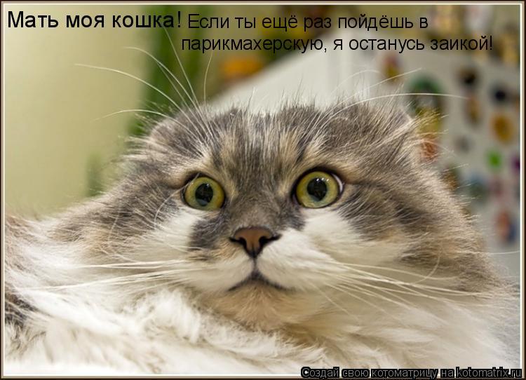Котоматрица: Мать моя кошка! Если ты ещё раз пойдёшь в  парикмахерскую, я останусь заикой!