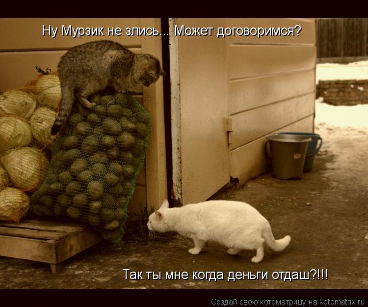 Котоматрица: Так ты мне когда деньги отдаш?!!! Ну Мурзик не злись... Может договоримся?