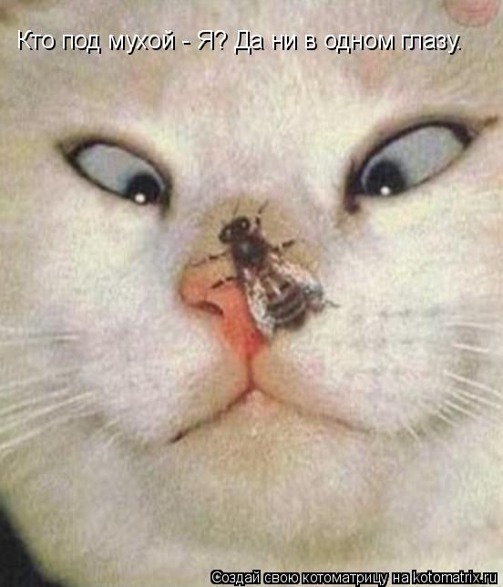 Котоматрица: Кто под мухой - Я? Да ни в одном глазу.