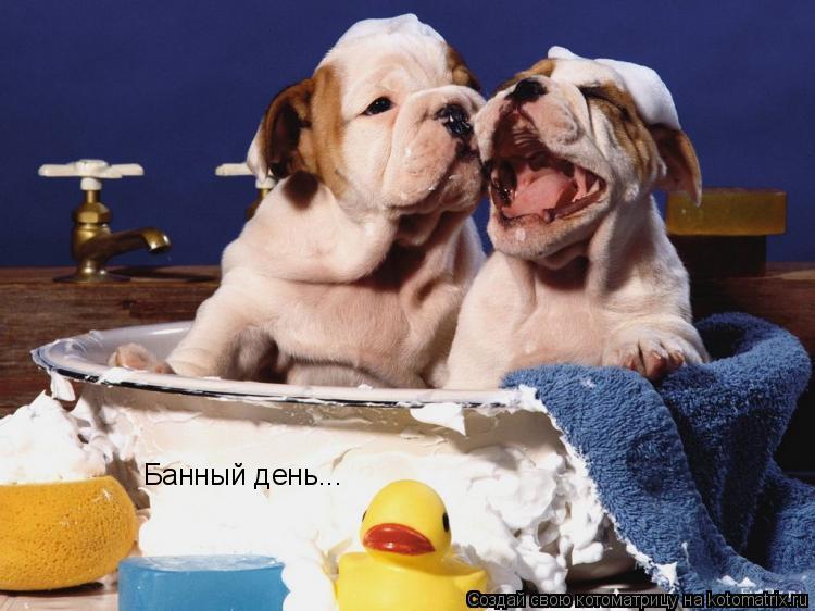 Котоматрица: Банный день...