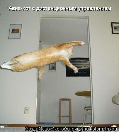 Котоматрица: Авиа-кот с дистанционным управлением