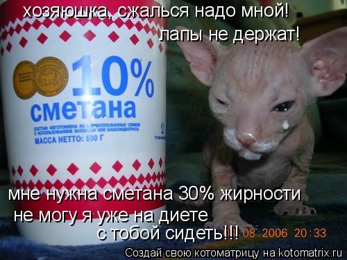 Котоматрица: мне нужна сметана 30% жирности не могу я уже на диете  с тобой сидеть!!! хозяюшка, сжалься надо мной! лапы не держат!