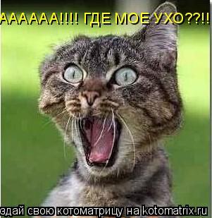 Котоматрица: АААААА!!!! ГДЕ МОЕ УХО??!!!!