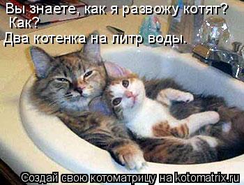 Котоматрица: Вы знаете, как я развожу котят? Как? Два котенка на литр воды.
