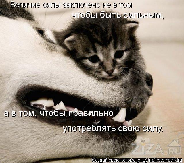 Котоматрица: Величие силы заключено не в том,  чтобы быть сильным, а в том, чтобы правильно  употреблять свою силу.