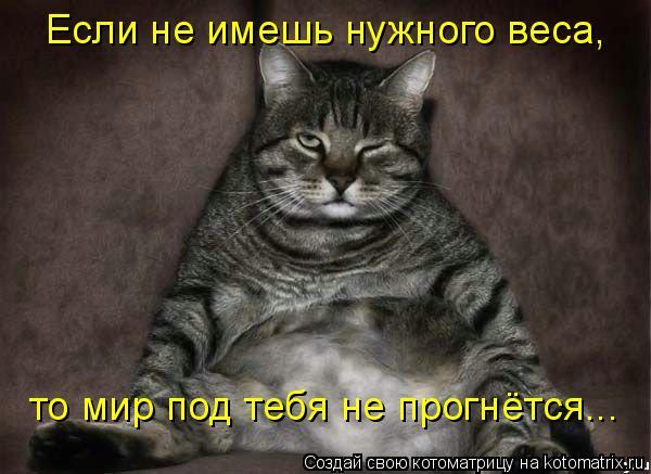 Котоматрица: Если не имешь нужного веса, то мир под тебя не прогнётся...