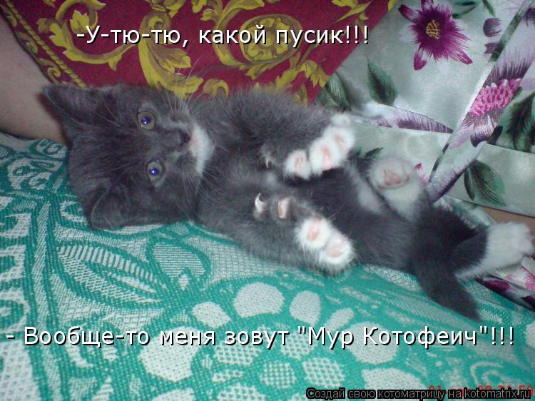 "Котоматрица: -У-тю-тю, какой пусик!!! - Вообще-то меня зовут ""Мур Котофеич""!!!"