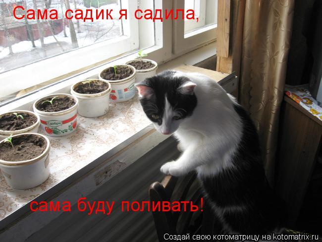 Котоматрица: Сама садик я садила, сама буду поливать!