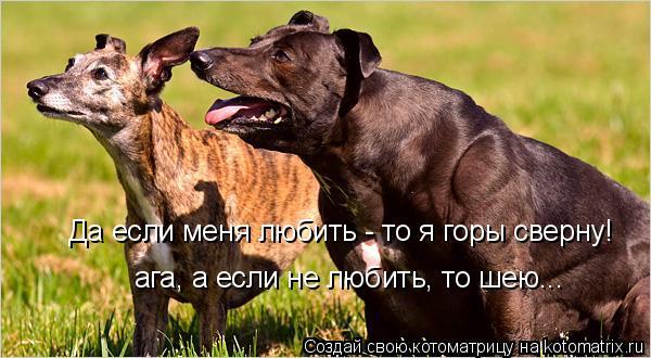 Котоматрица: Да если меня любить - то я горы сверну! ага, а если не любить, то шею...
