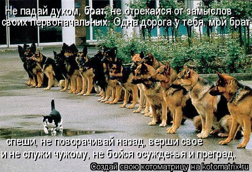Котоматрица: Не падай духом, брат, не отрекайся от замыслов своих первоначальных. Одна дорога у тебя, мой брат, и не служи чужому, не бойся осужденья и пре